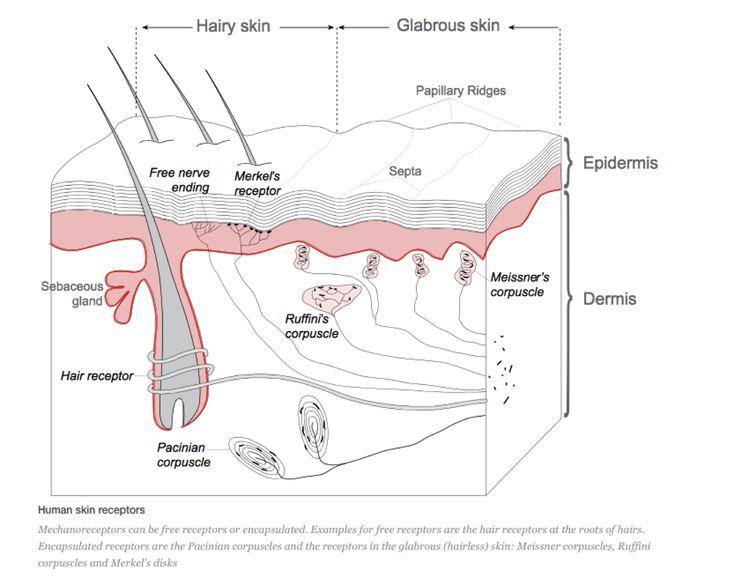 18 best USMLE dermato images on Pinterest | Medizin, Anatomie und ...