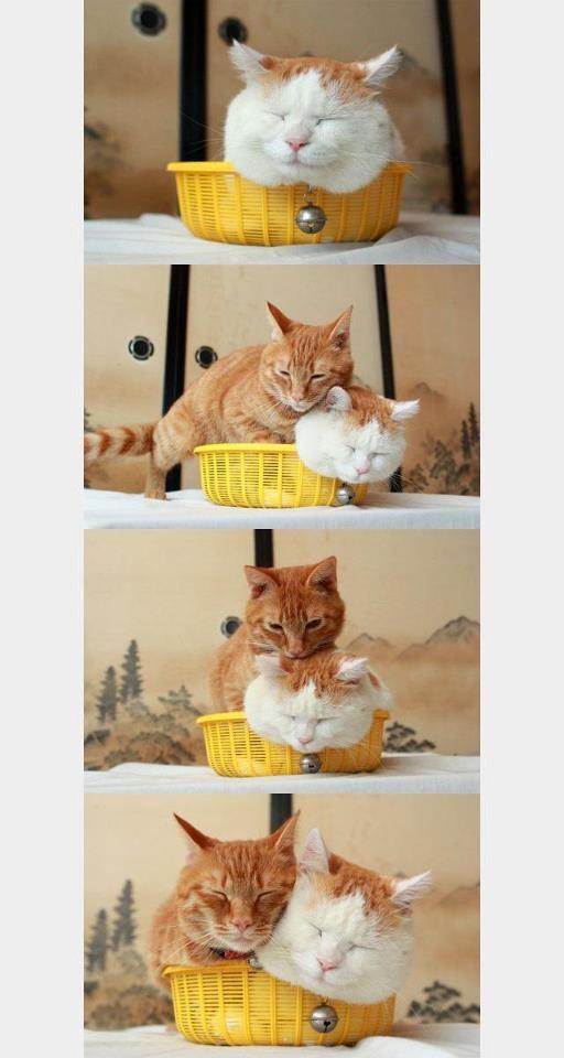 Squeeeeeeze! #cats  @Juliana Loh