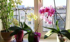 INTERIOR. Cómo recuperar y revitalizar una orquídea.