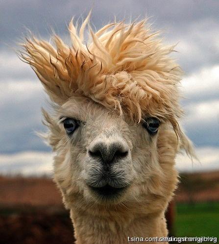 48 besten alpaca frisuren bilder auf pinterest frisuren. Black Bedroom Furniture Sets. Home Design Ideas