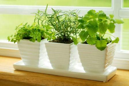 Double-duty herbs