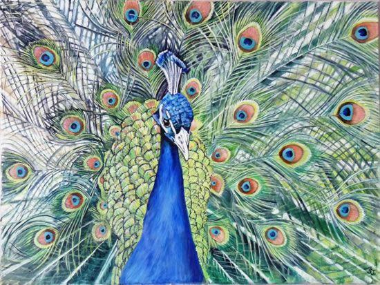 peacock.jpg 550×413 pixels