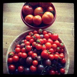 Tomater fra Den lille have