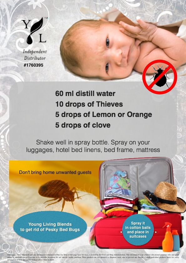 741 Best Images About Bed Bug On Pinterest Bed Bug Spray