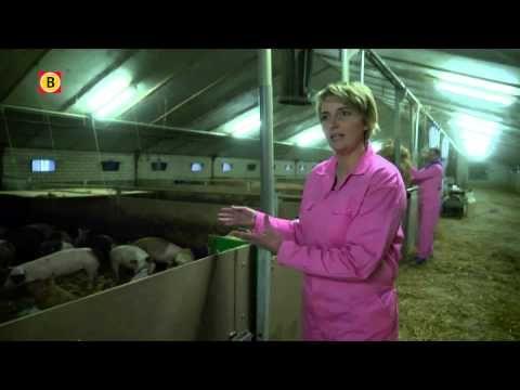 ▶ Zo houd Marijke Nooijen varkens, een hele bewuste keuze. En ja, ze zijn om op te eten.