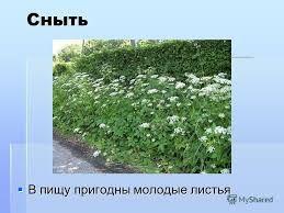Картинки по запросу съедобные растения в лесу