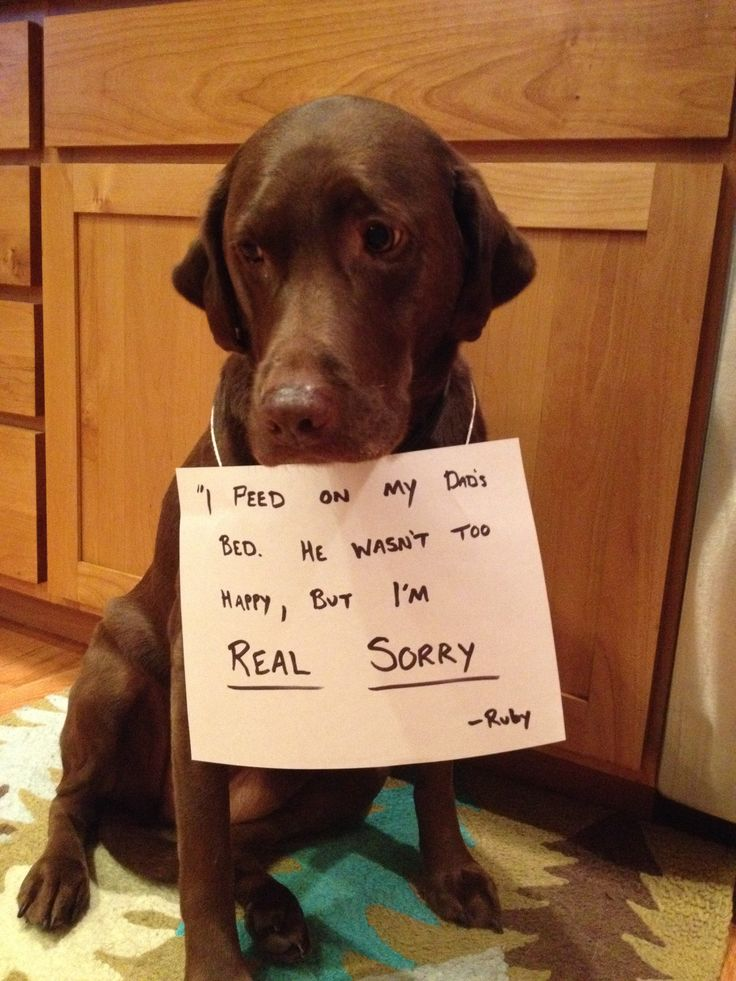 Ruby is Real Sorry Dog shaming funny, Funny animal faces