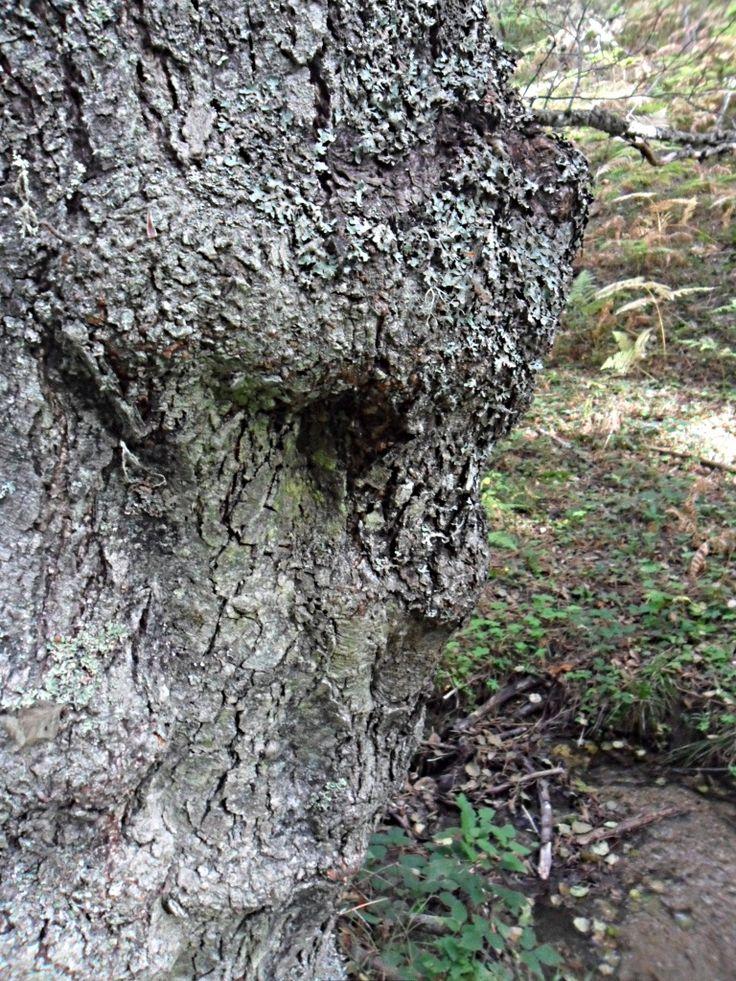 a face on a tree...impressive!