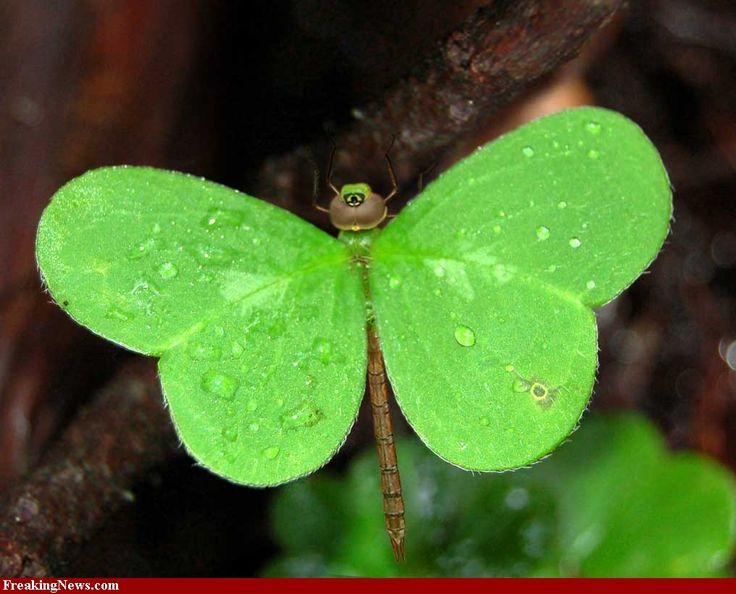 Pretty leaf dragonfly