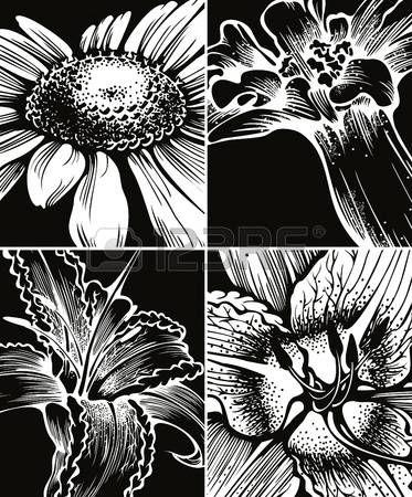 fiori stilizzati: Set di sfondi grafici floreali