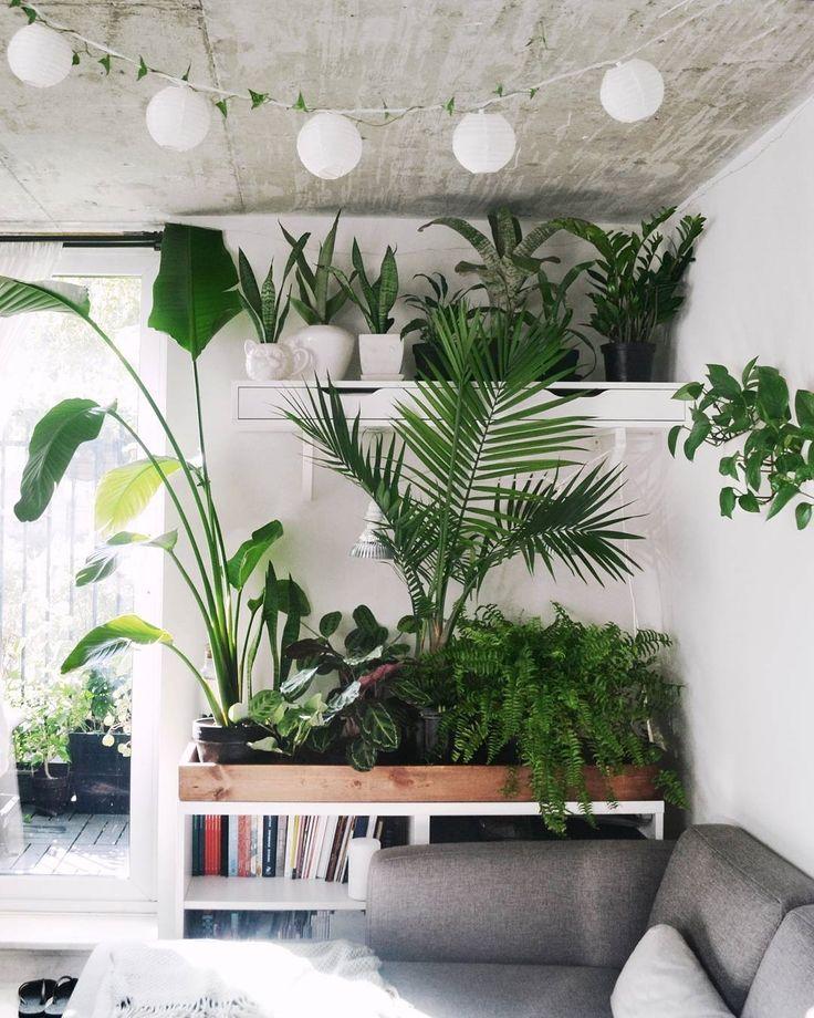 Sieh Dir Ses Instagram Foto Von Urbanjungleblog An Gefällt 12 7 Tsd Mal Make My Home A Garden Pinterest Plants Interiors And House