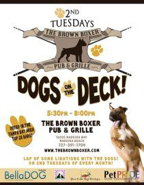 Dog Friendly Restaurants Madeira Beach