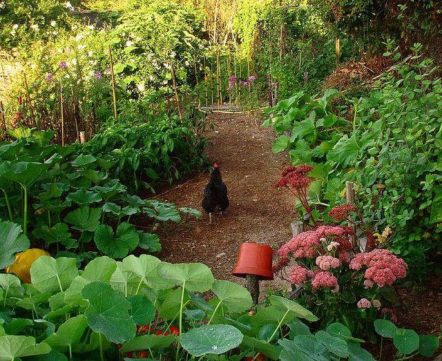 jardin en permaculture ? indices : BRF au sol, pot à l'envers surélevé, poule libre, végétaux mélangés...