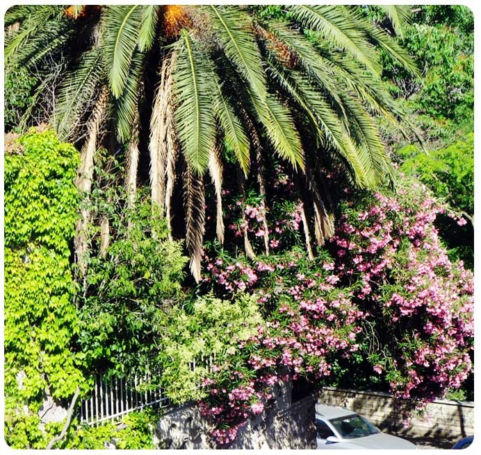 Roma-Monteverde Vecchio