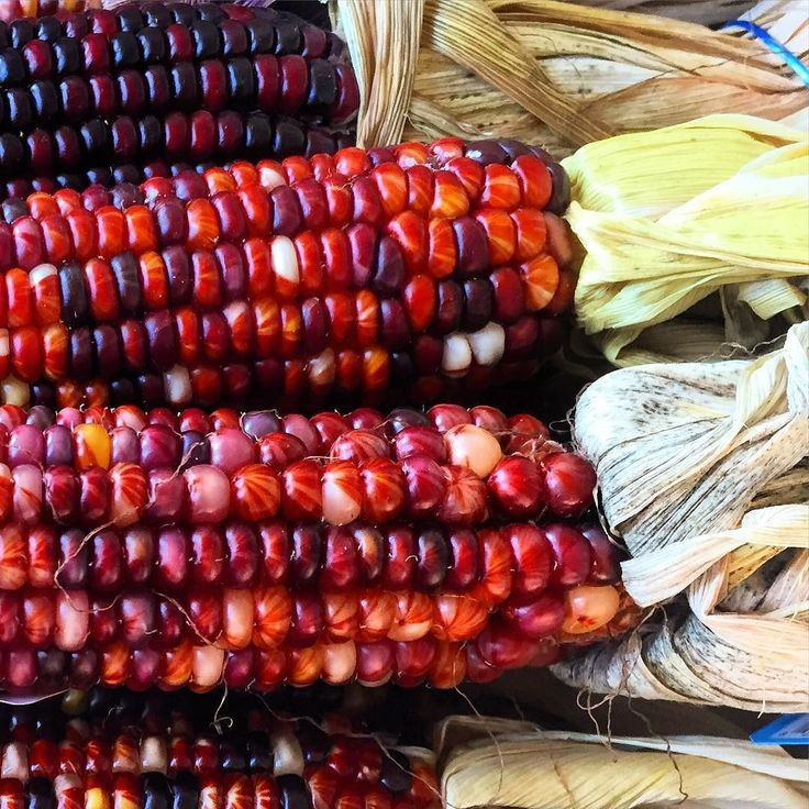 Flint corn - The colors of fall #fall #explore #exploreeverything #master_shots #fit #foods #foodie #foodies #foodgasm #foodporn #chef #justgoshoot #naturelovers #nature #vegan #vegetarian #instagood #instafood #eat #eating #explore #eatclean #eeeeeats #halloween #beauty #beautiful #fashion #love #Theartofplating #thecreatorclass by jeffrahn