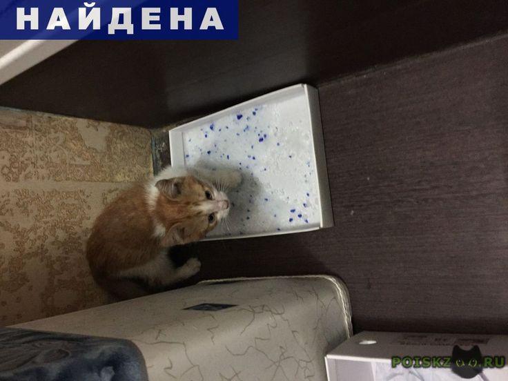 Найден котёнок г.Москва http://poiskzoo.ru/board/read32071.html  POISKZOO.RU/32071 В Пятницу, .., в .. на ул. Семёновский вал, ст. м. Семеновская, недалёко от магазина Атак, найден маленький котёнок-мальчик, .. месяца. Явно домашний:чистенький, упитанный, очень ласковый, приучен к лотку. Местами на шерсти пятна от розового фломастера или маркёра. Очень ждёт своих хозяев!   РЕПОСТ! @POISKZOO2 #POISKZOO.RU #Найдена #кошка #Найдена_кошка #НайденаКошка #Москва