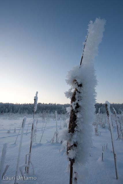 Winter at Lake Tuusula
