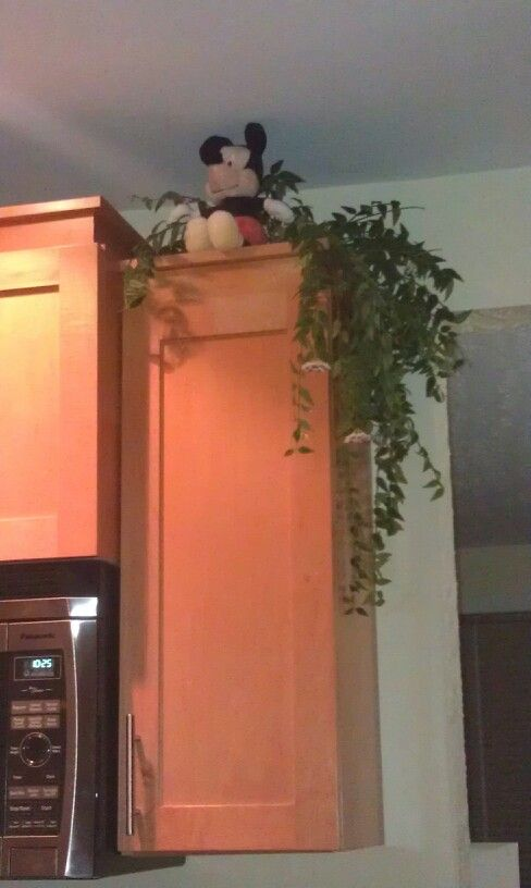 Hiding on the top of the cupboards