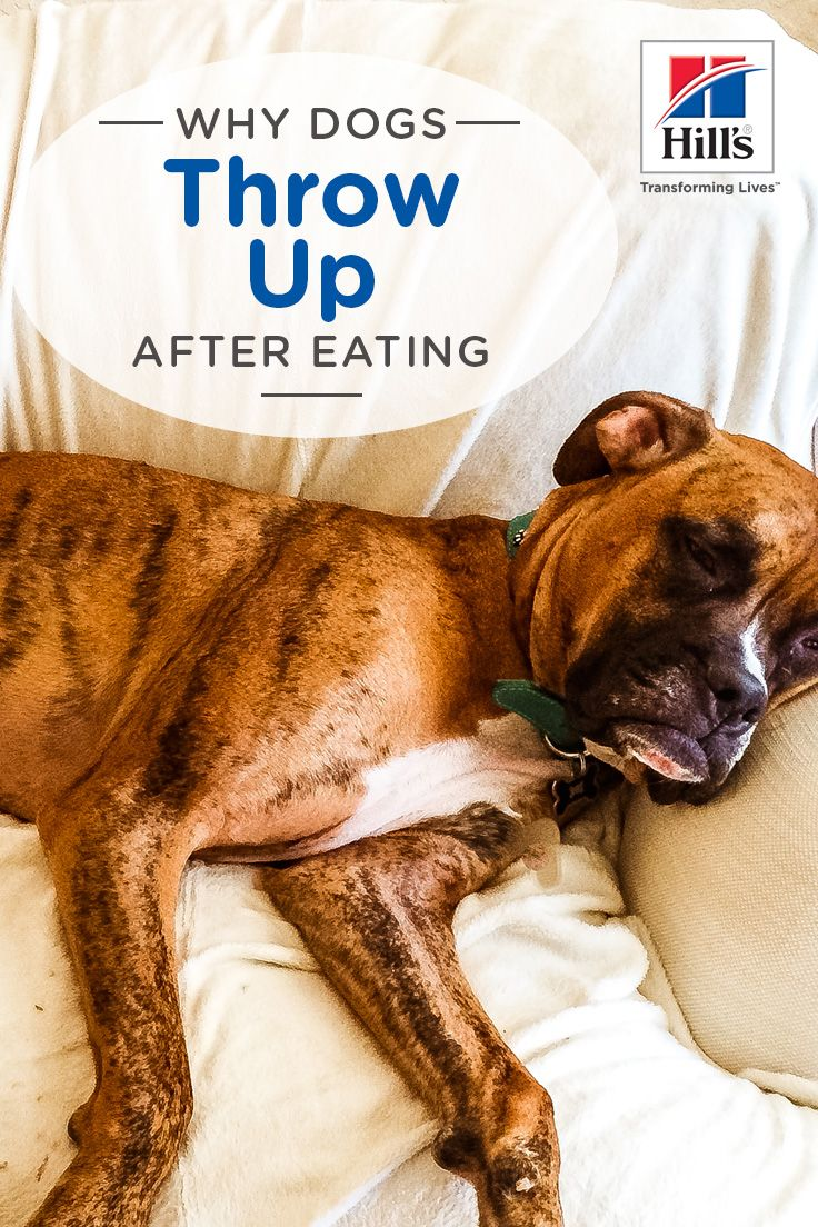 Reasons Why Your Dog Is Throwing Up After Eating Dogs Eating