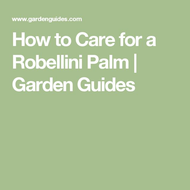 How to Care for a Robellini Palm |  Garden Guides