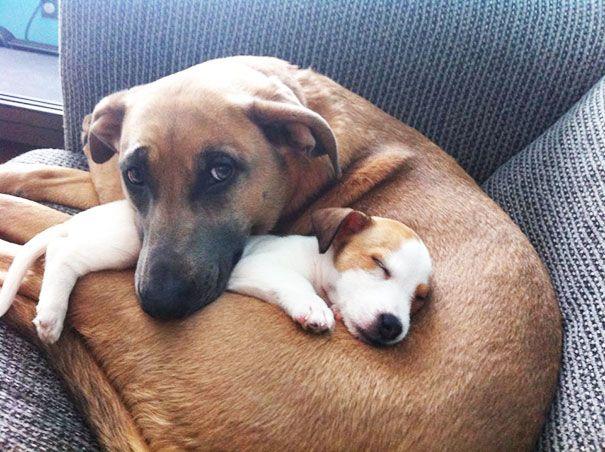 Dog Best Friends 70