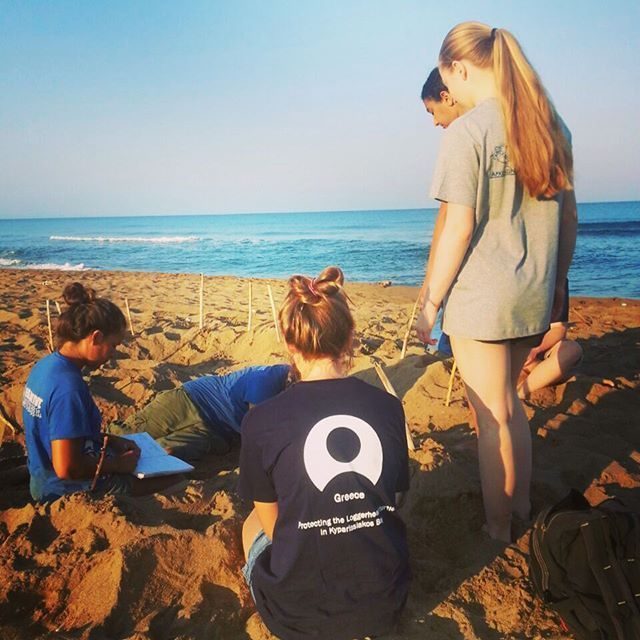 Turtle patrol! Our volunteers found a nest in Greece. Time to do an egg count and secure the nest from predators.  #gvi #conservation #volunteer
