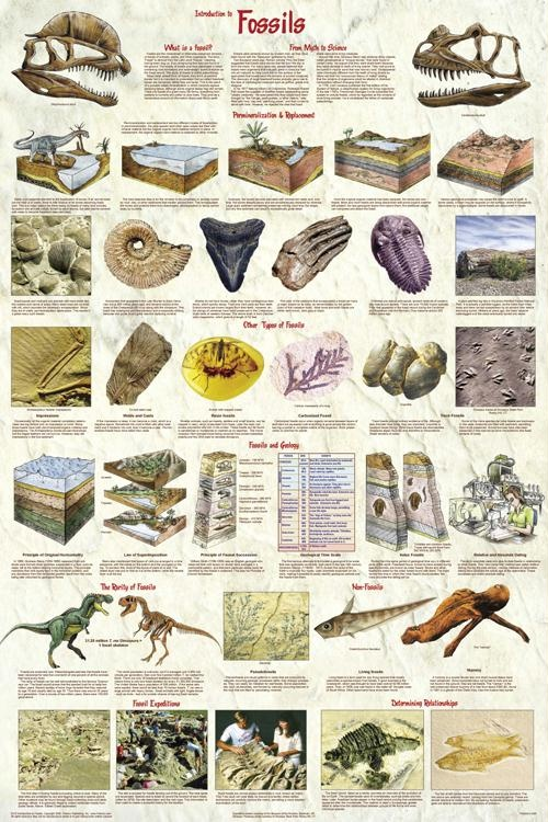 Are index fossils used for relative dating 9