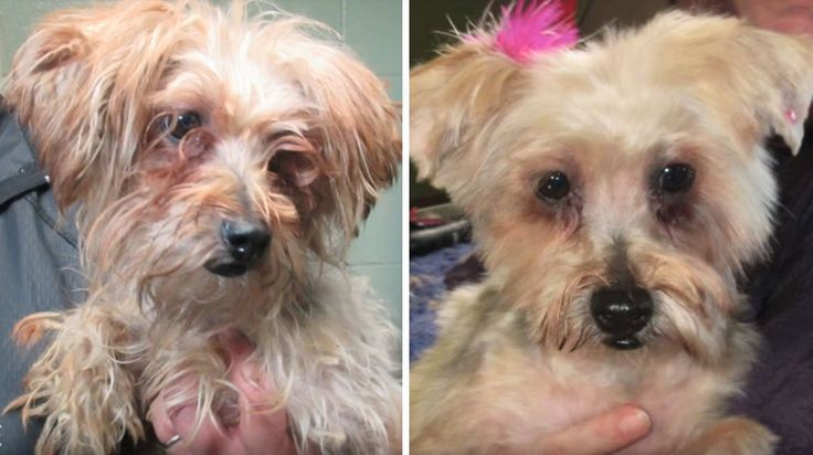 Comedian Gifts Local Dog Shelter with Surprise Makeovers for Every Dog [Video]