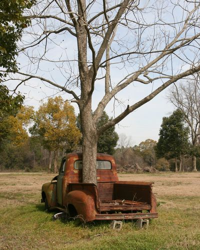 Texas adopted the Pecan tree as its' State Tree in 1919. Old truck with a tree growing through the bed, never seen a tree growing through a truck bed before.
