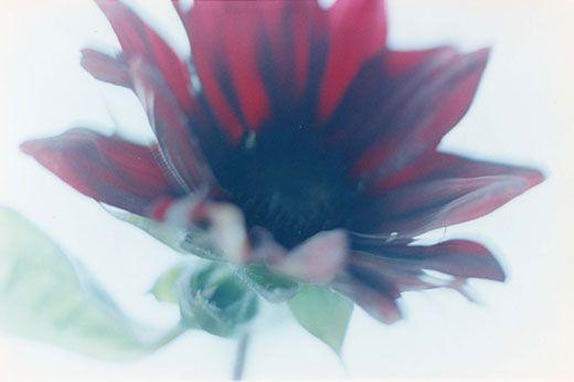 Acid Bloom-28 (B4サイズ 25.7×36.4cm)