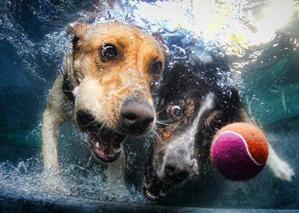 ¿Todos los perros saben nadar?