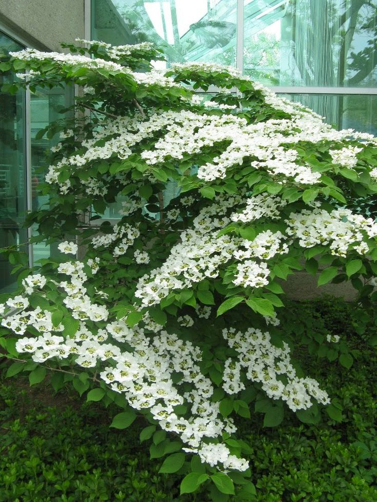 18 best native perennials shrubs and trees for zone 5 6 toronto gardens images on pinterest. Black Bedroom Furniture Sets. Home Design Ideas