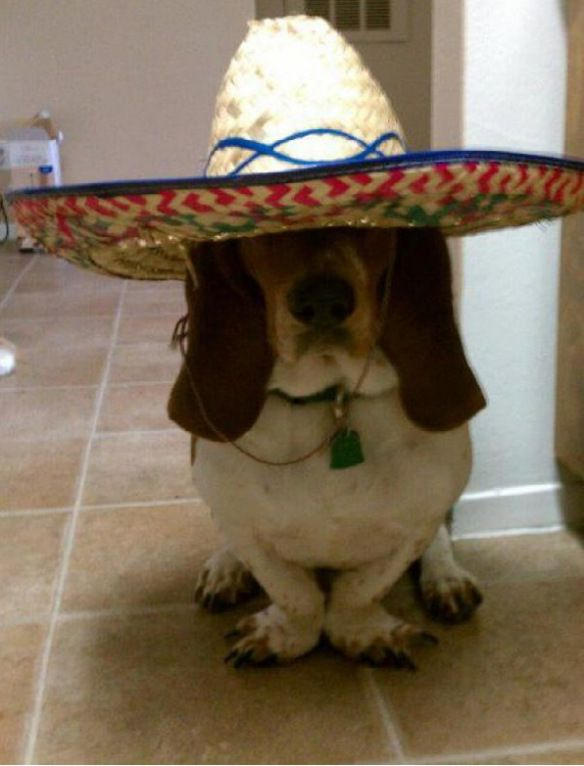 Funny Basset Hound ~ This little guy would fit right in at our family reunions! lol