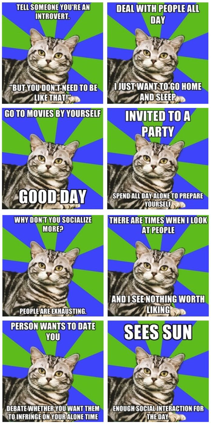 Describes me perfectly! #Introvert #Cat #meme