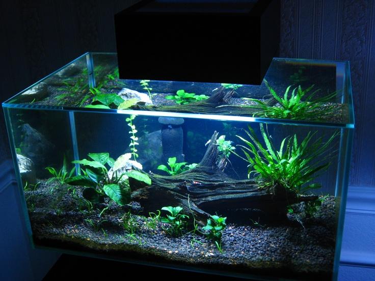 12 best images about fluval edge aquarium on pinterest for Aquarium edge