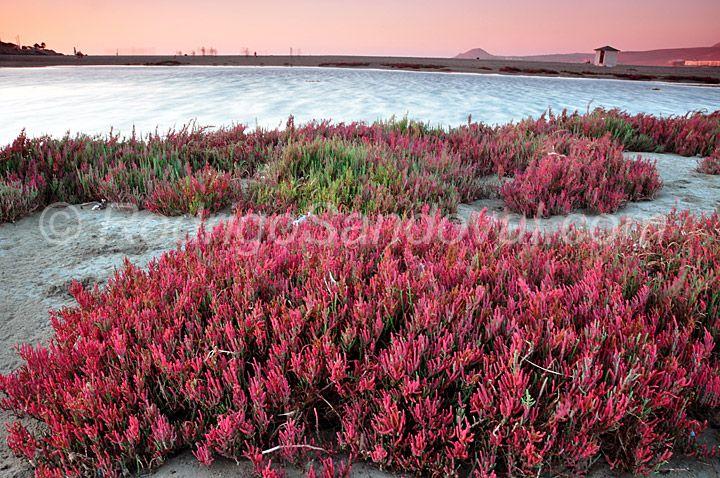 Fotografía en NaturaStock.com