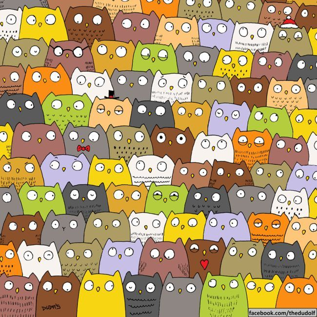 Here are some adorable owls. There's nothing else in there. Just owls. Kidding! Find the cat, puny humans.