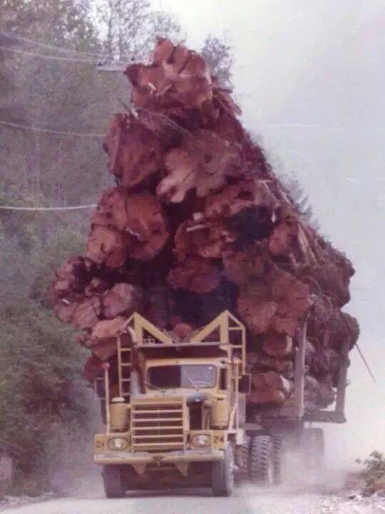 Really? You couldn't haul just ONE more log?