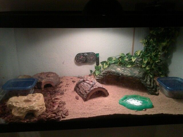 leopard gecko habitat jungle pets breeders pinterest habitats leopard geckos and geckos. Black Bedroom Furniture Sets. Home Design Ideas