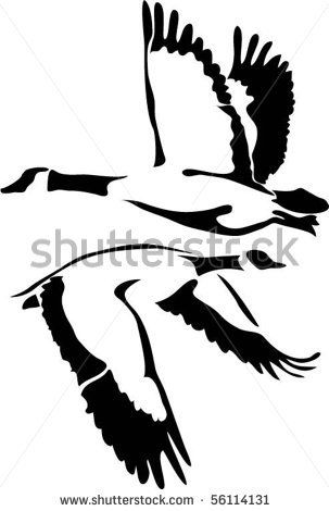 Canada goose black and white drawing google search