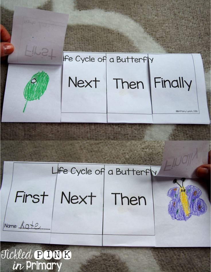 Life Cycle of a Butterfly sequencing