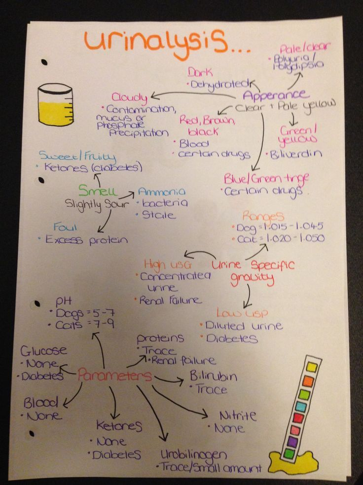 Urinalysis 1982 best NursingNP images on Pinterest