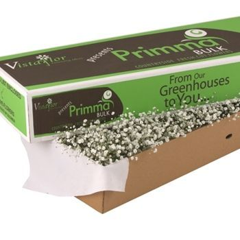 Bulk Flowers Via Costco - baby's breath 100 stems $80