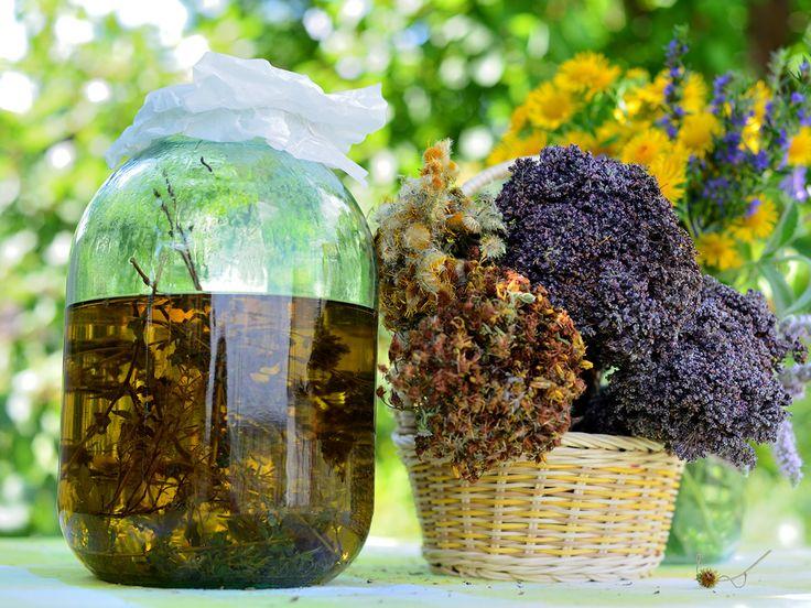 Dedicato a Maurice Mességué, il « nouveau maître des plantes », convinto che le piante (come l'uomo) subissero l'influenza degli astri e in particolare, del sole. Lo ricordiamo con affetto e grande rispetto in questo solstizio d'estate.