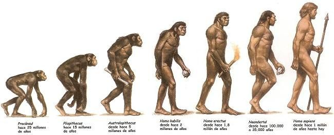 evolucion del hombre primitivo - Buscar con Google