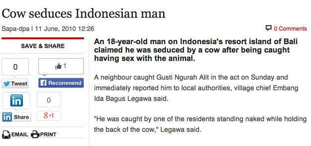 When this cow seduced a man, somehow. | The 30 Most Head-Scratchingly Bizarre News Headlines Of All Time