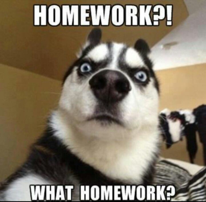 college writing assignment funny animal pictures