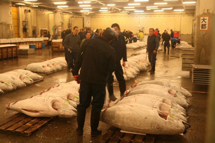 Tokyo : marché aux poissons de Tsukiji