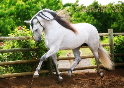 Green trees and an Andalusian, stunning!