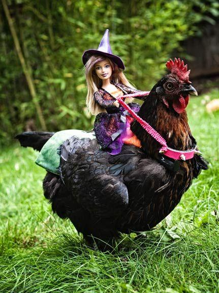 Was ein Glück für meine Hühnchen, dass ich keine Kinder hab.  For those of you who think chickens aren't fun...... Barbie loves her pet chicken!